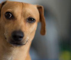 Seu cão não vem até você quando chamado?