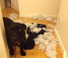 O seu cão realmente sabe quando faz algo errado?