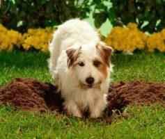 Um cão, um quintal e muitos buracos