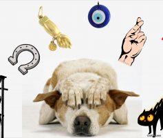 Cães também tem superstições