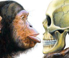 """Experimento """"Bonzinho/Malvado"""" e a memória dos animais"""
