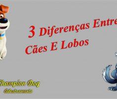 Três diferenças entre cães e lobos